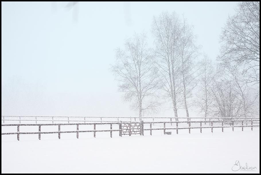 Hekken in de sneeuw