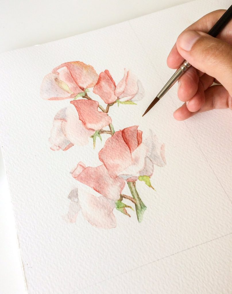 Lathyrus in aquarel